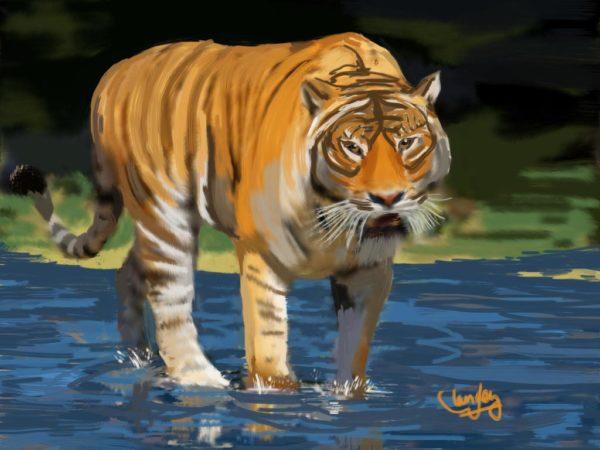 Tiger in River
